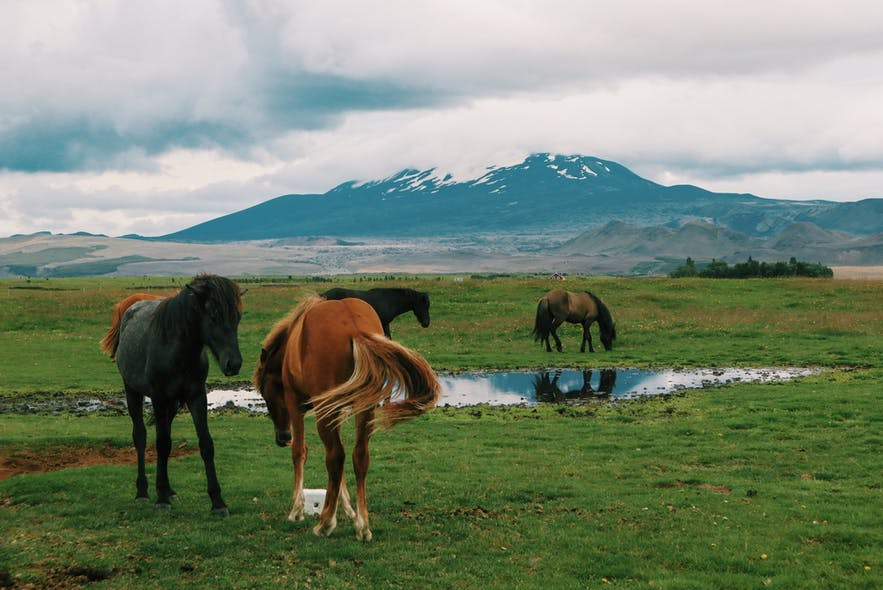 Hekla volcano in Iceland is one of the country's most explosive.