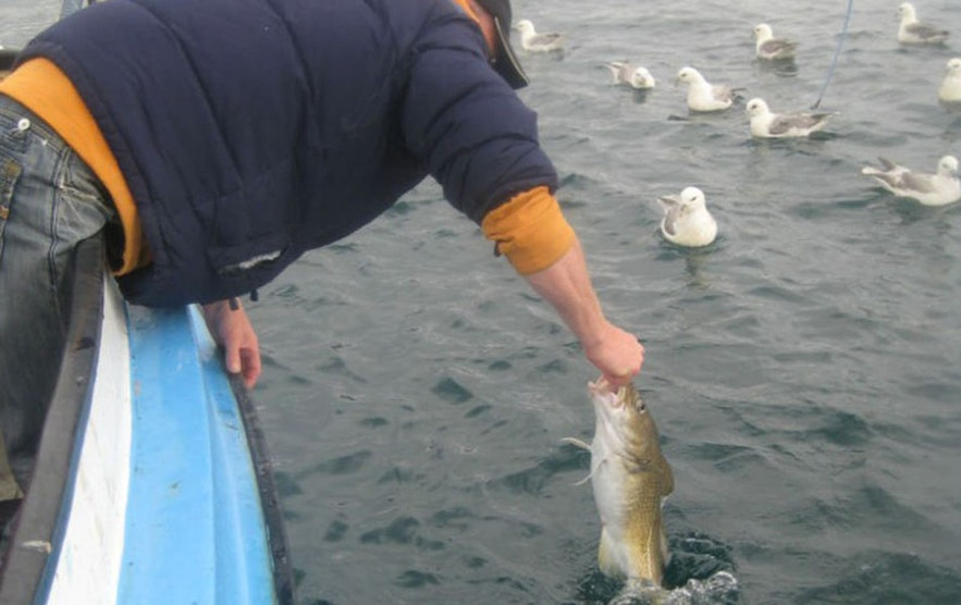 Fishing is a celebrated pastime in Iceland.