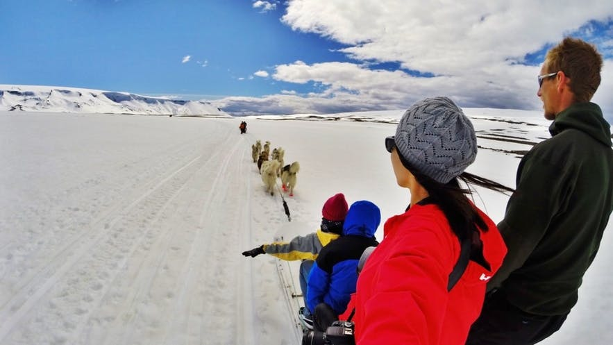 Dog sledding offers up the perfect opportunity to make some new furry friends.
