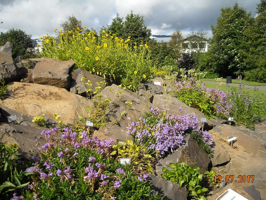 The botanical gardens of Akureyri are the northernmost of the world.