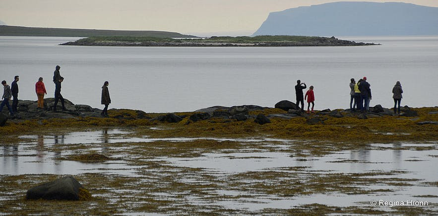 People seal-watching on Hvítanes Westfjords of Iceland