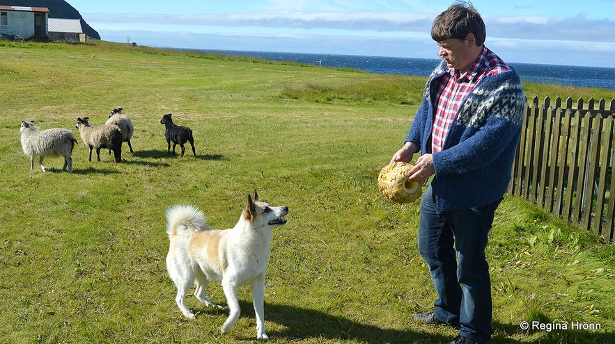 My husband playing with a dog at Ingjaldssandur