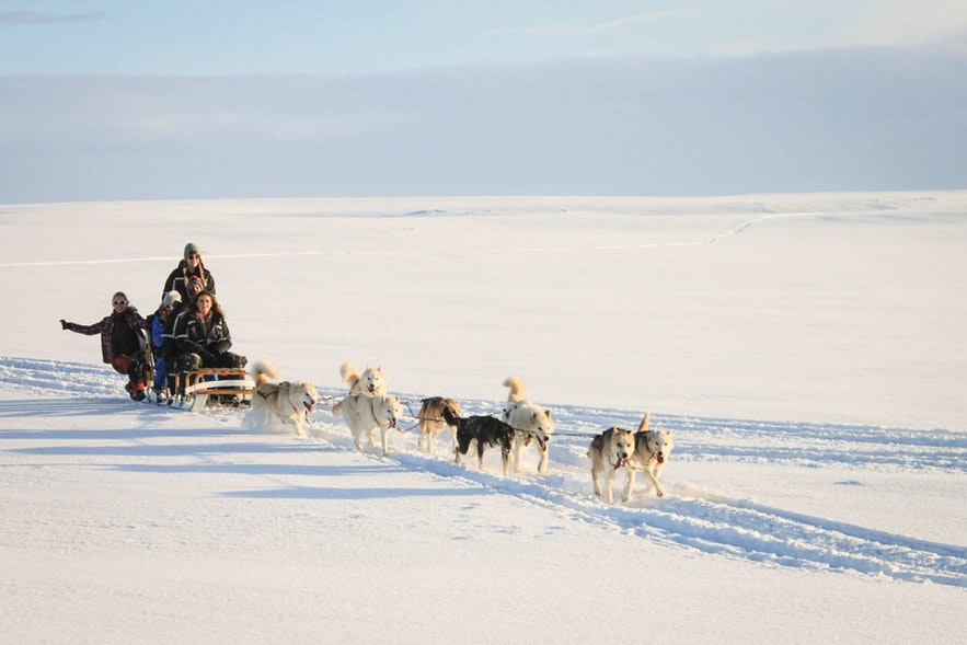 Dog Sledging provides a great opportunity to meet some of the country's furriest friends.