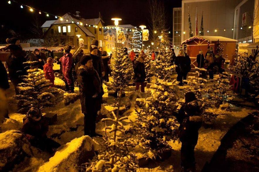 Christmas trees for sale in Reykjavik.