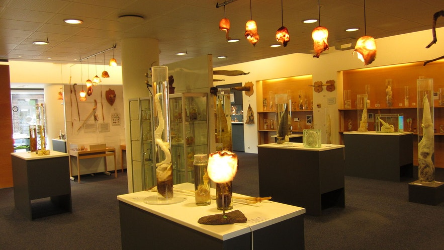Iceland's Phallological Museum is an example of the country's comfort with nudity.