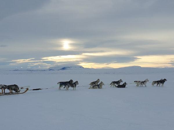 Snow Dogs ehf.