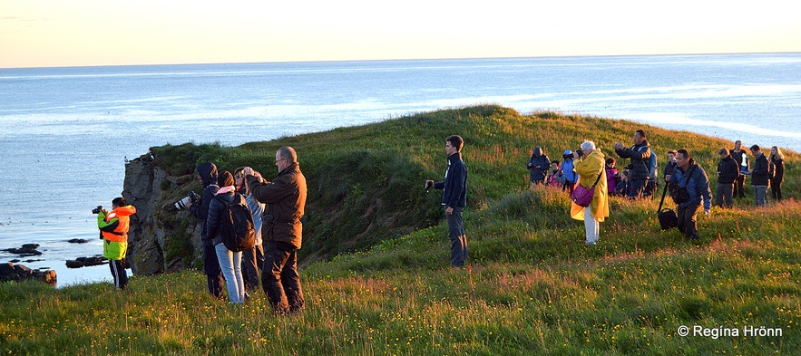 The group photographing puffins at Grímsey island