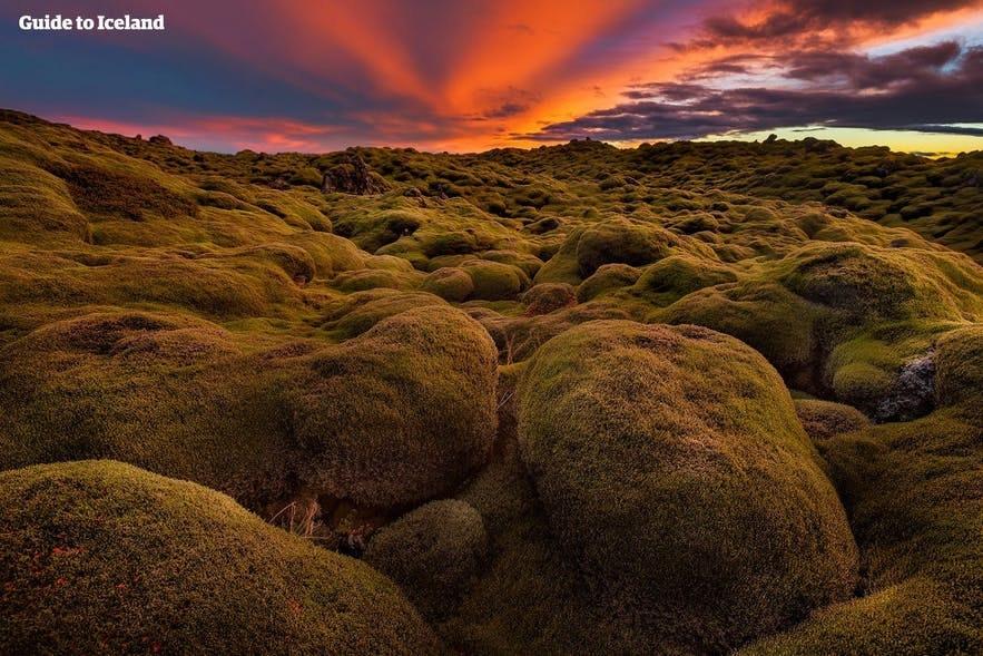 被苔藓覆盖的熔岩是雷克雅内斯半岛上的典型景观