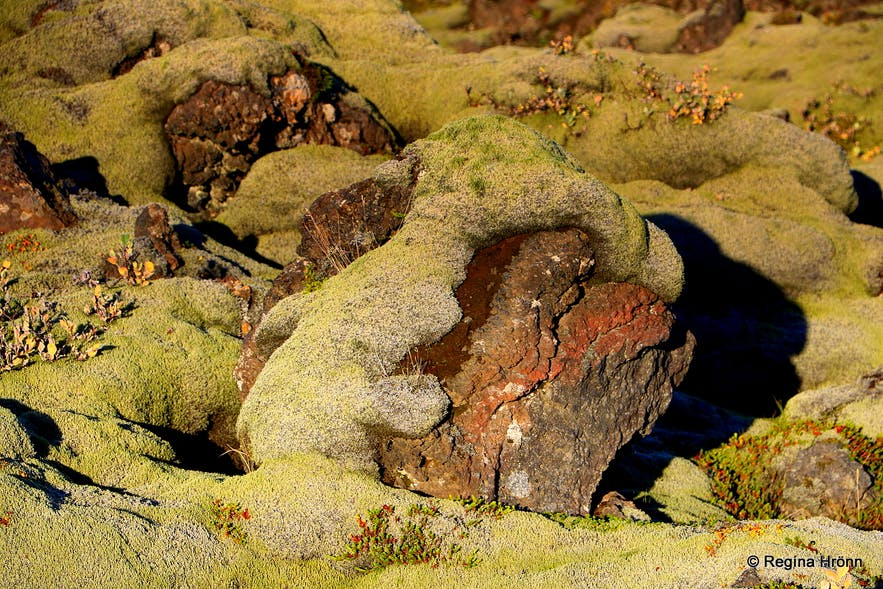 Eldhraun lava field and moss covered lava