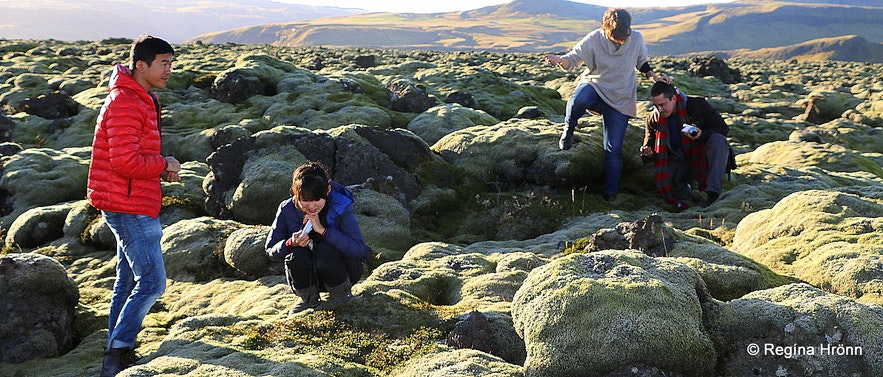 In Eldhraun lava field South-Iceland