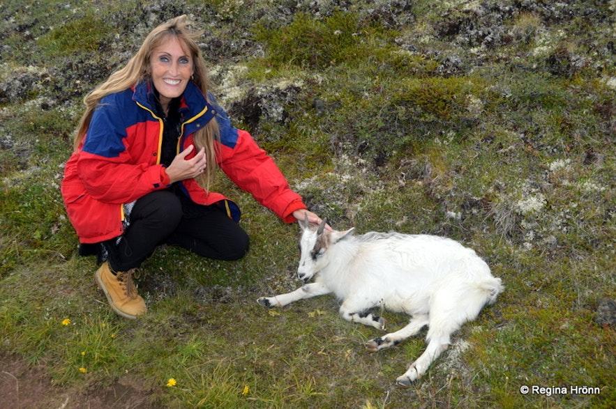 A goat on the path leading to Klasar Mývatn