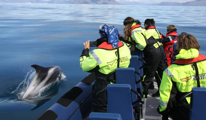 Thrilling 2 Hour Whale Watching Tour on a RIB Speedboat from Reykjavik