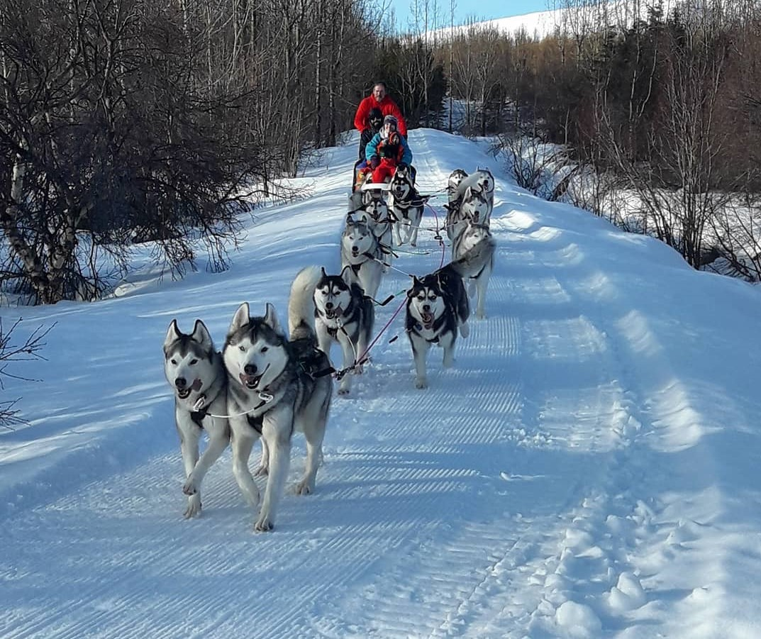 Private 1.5 Hour Dog Sledding Experience in Akureyri with Photo Opportunities